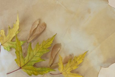 Old paper with dry autumn leaves