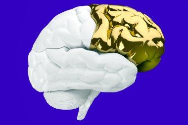 Mind of a genius