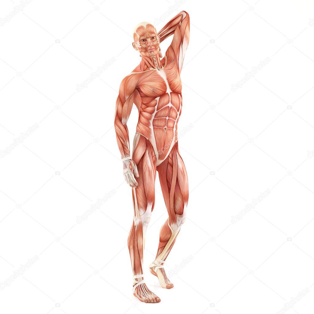 Niedlich Mann Anatomie Zeichnung Fotos - Anatomie Ideen - finotti.info