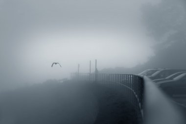 Bird in a fog above the bridge, San Francisco, California stock vector