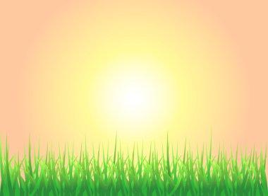 Sunset Grass Background