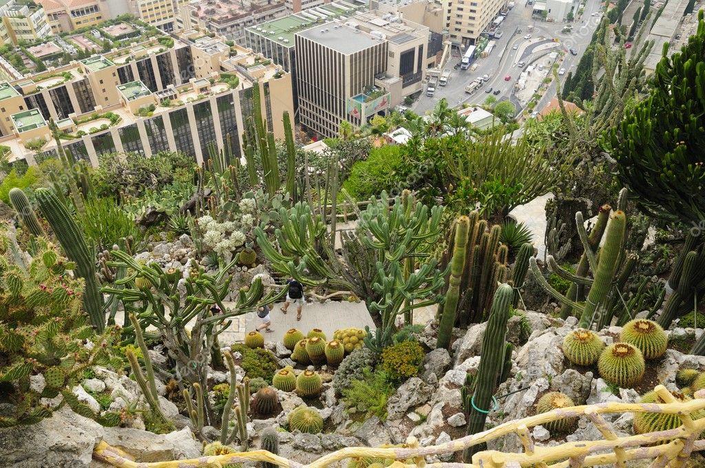 Exotischer Garten Stockfoto Alexarocas 6837476