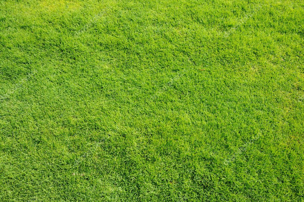 Prato verde ottimo per background e texture foto stock for Irrigatori prato verde