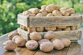 Fotografie brambory v krabici