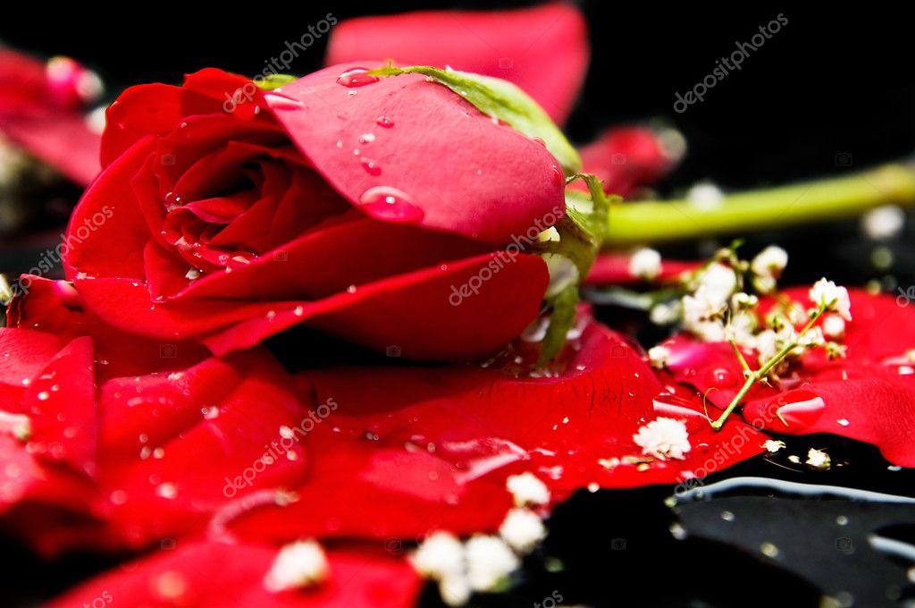 Sfondo Di Rose Nere Foto Stock Luiscar 6956085