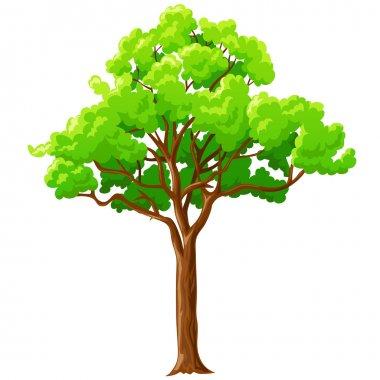 Cartoon green tree isolated on white.