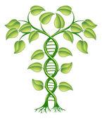 koncept rostlinné DNA