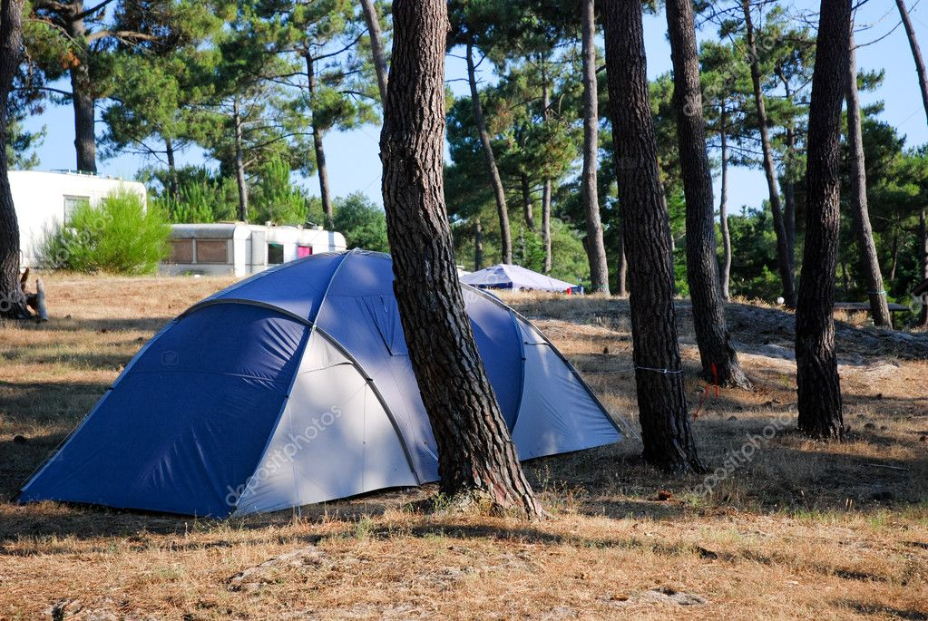 Camping In Pine Forrest