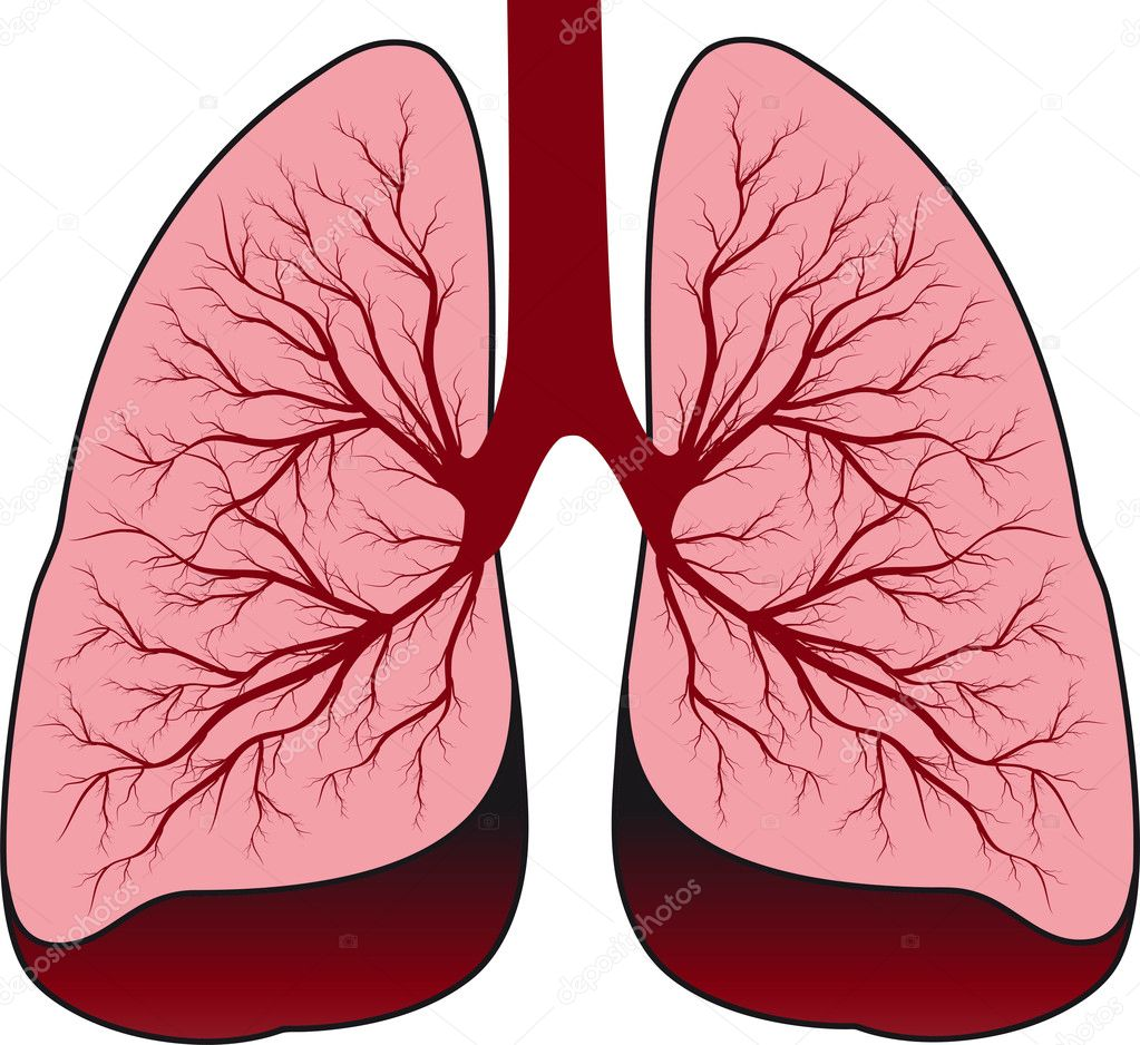 Human lungs stock vector marynamelnyk 7108938 human lungs vector by marynamelnyk ccuart Images