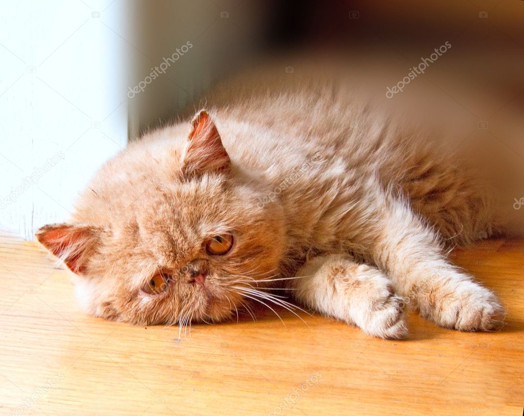 Poor Cat Laying On The Floor U2014 Stock Photo #7575990