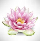 Jediné kvetoucí Lotosový květ