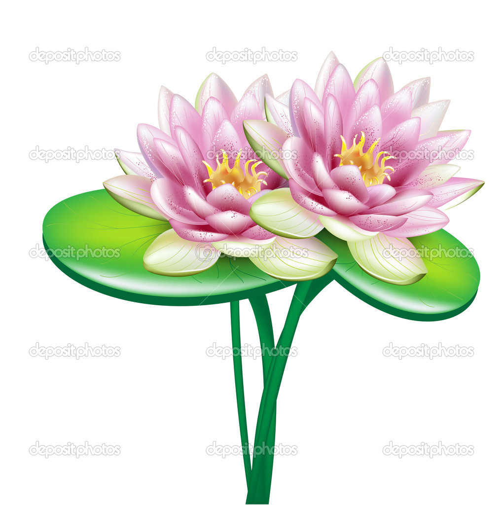 Two open lotus flowers in bouquet stock vector corneliap 7198669 two open lotus flowers in bouquet stock vector izmirmasajfo