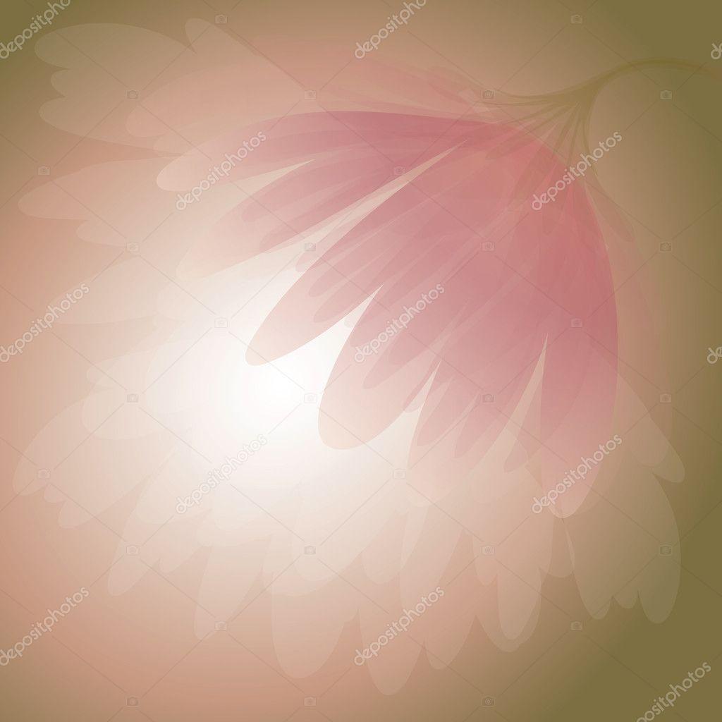 Rosy Peony