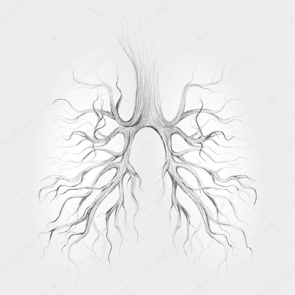 Tree like lungs