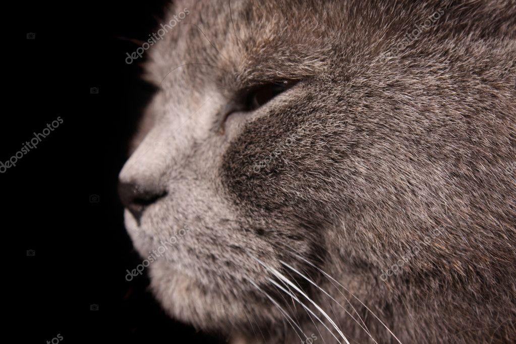 Μαύρο χείλη μουνί φωτογραφίες
