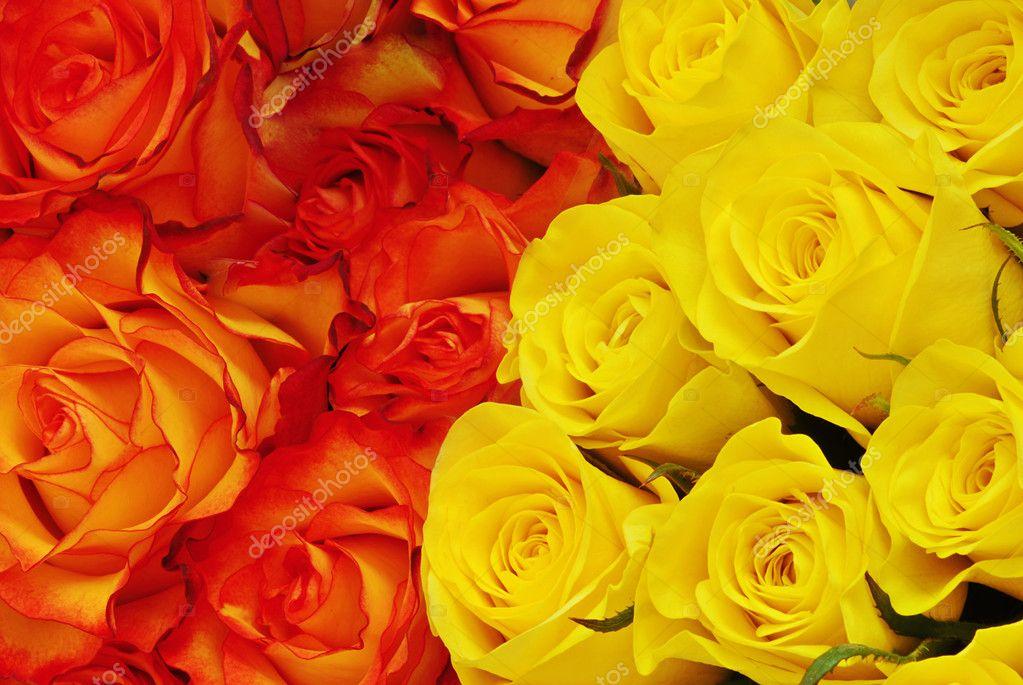 Zwei Arten Von Rosen Stockfoto C Fyletto 6806523