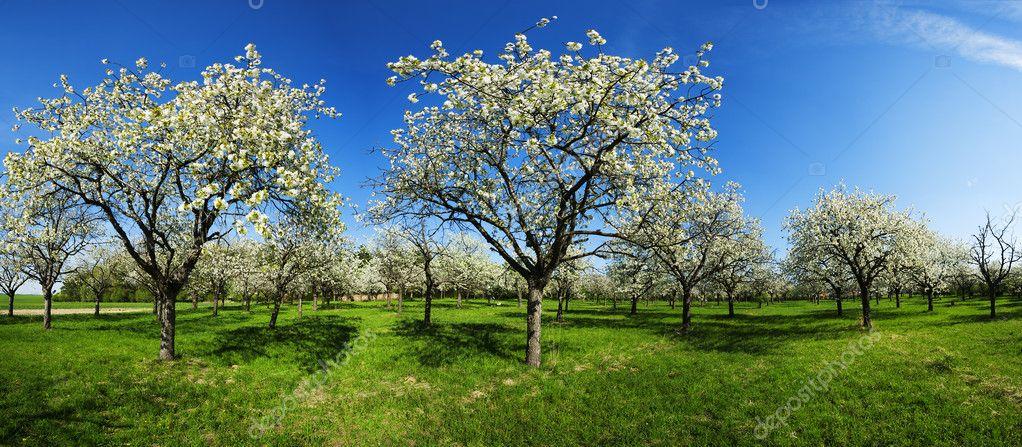 Apple groove