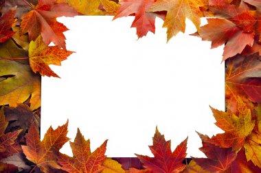 Fall Maple Leaves Border