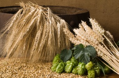 Wheat with hop cones