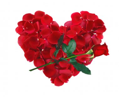 Beautiful heart of red rose petals and rose flower isolated on w
