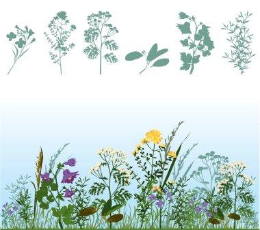 Herbs in meadow