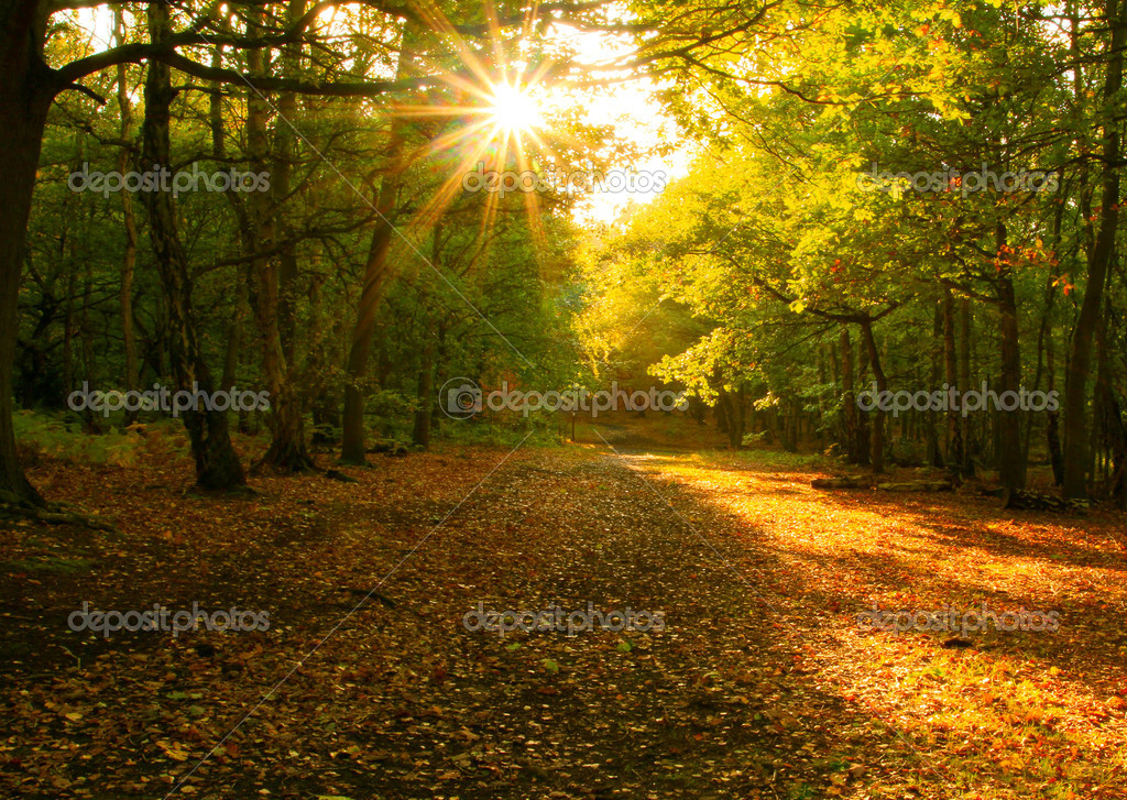 Sunshine through the autumn forrest