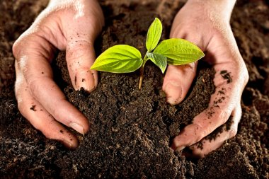 Farmer hands holding a fresh young plant stock vector