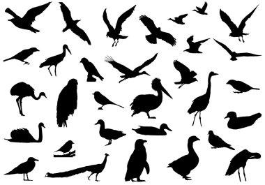Shadows of birds