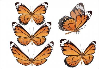 Batterfly. Vector illustration.