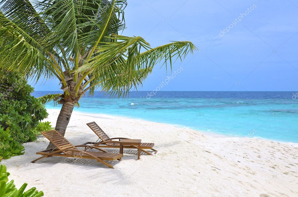 Two beach chairs under palm tree on ocean front