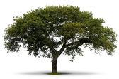 egész zöld fa felett fehér