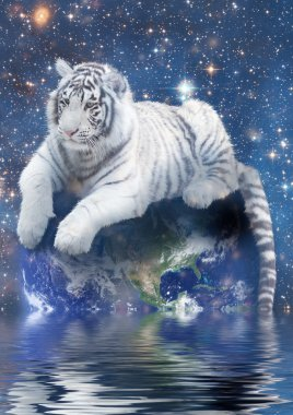 White tiger siting on Earth