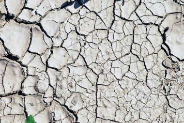 Dry earth background texture