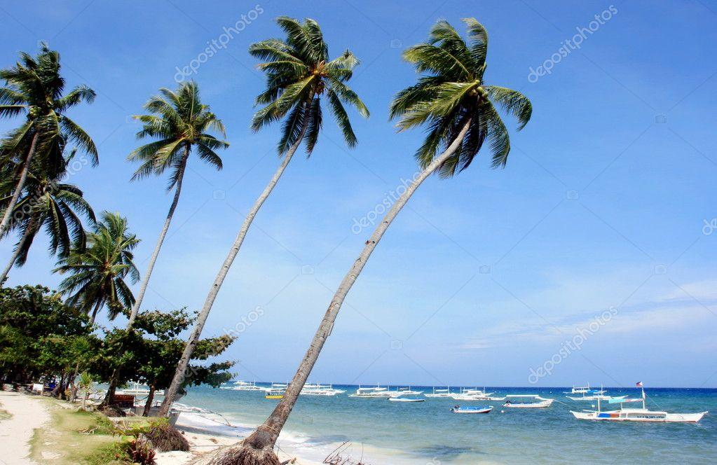 A tropical beach resort