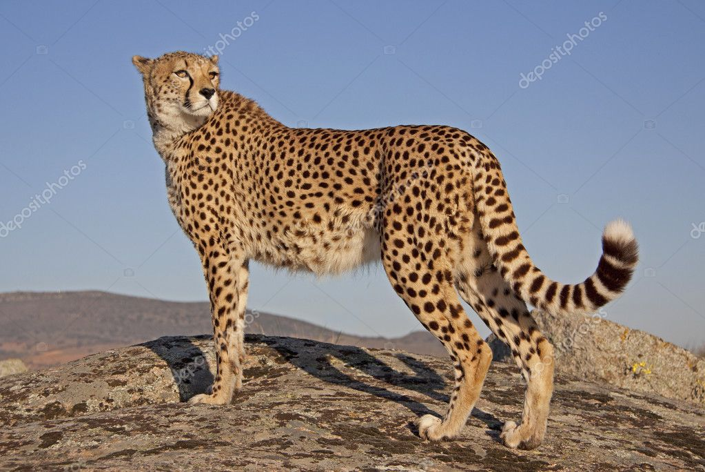 Скачать программу gepard бесплатно