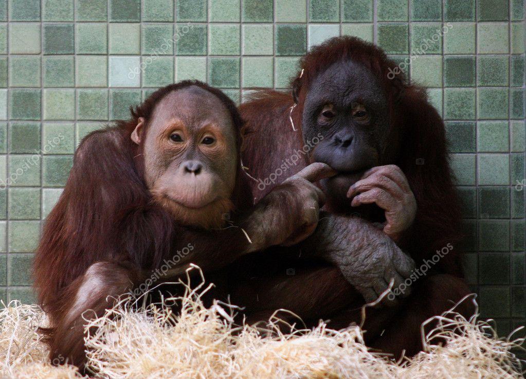 ᐈ Monos Imagenes De Stock Fotos Monos Enamorados Descargar En
