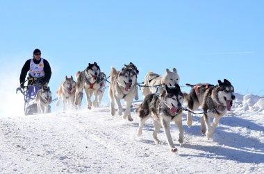 Dog sledging stock vector