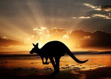 Kangaroo on Sunset