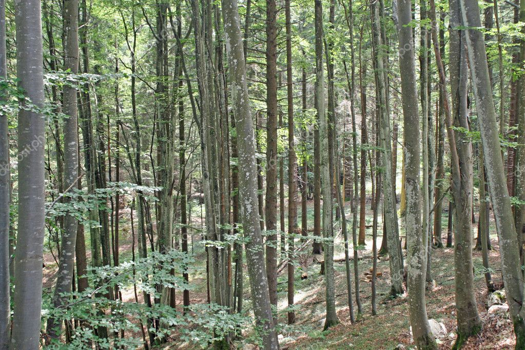Dense forest of trees in the Tuscan hills in Italydense forest of trees in