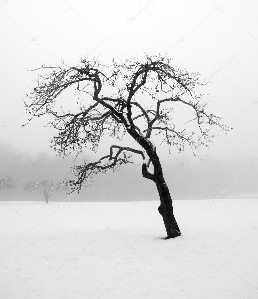 Bare tree in winter