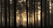 Fotografie Sonnenuntergang in nebligen Wald