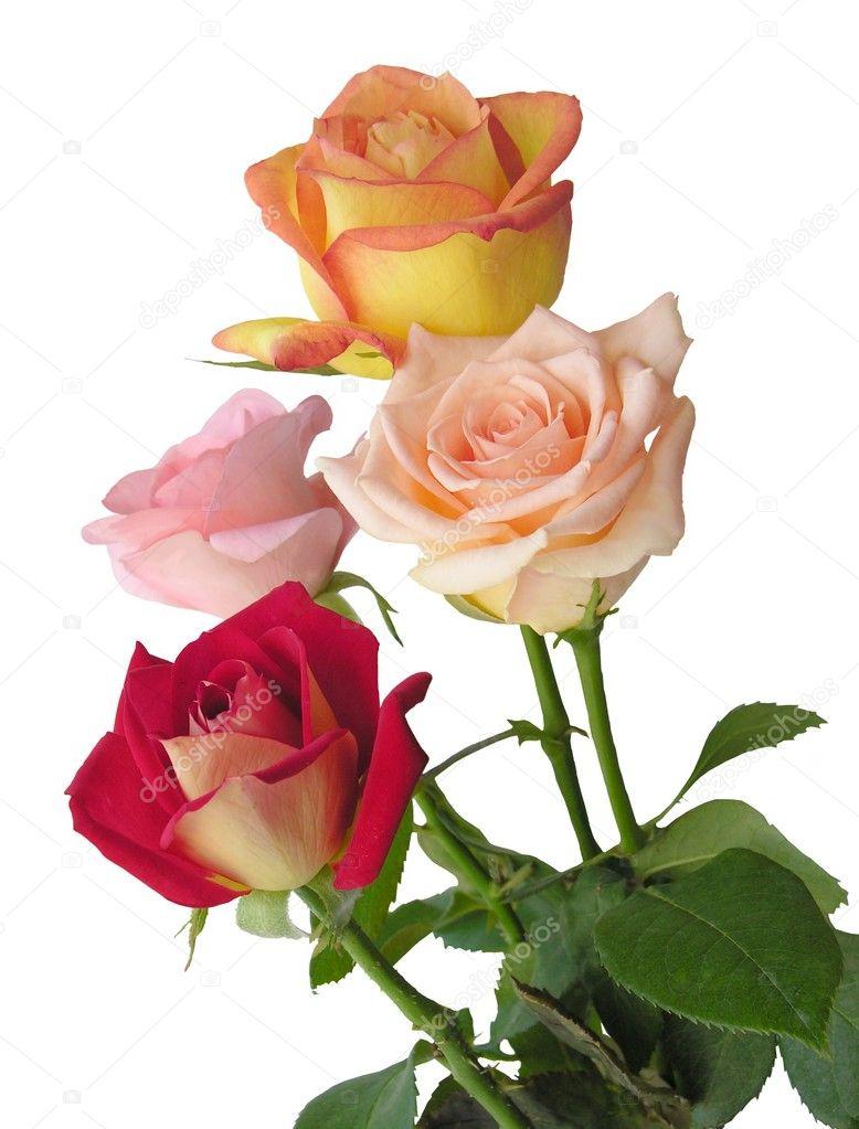 Bonitas Rosas Foto De Stock Manka 7806204