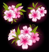 Fotografie krásné pozadí s květinami