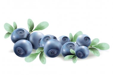 Blueberries. vector illustration of a realistic
