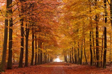 Sand lane with trees in autumn