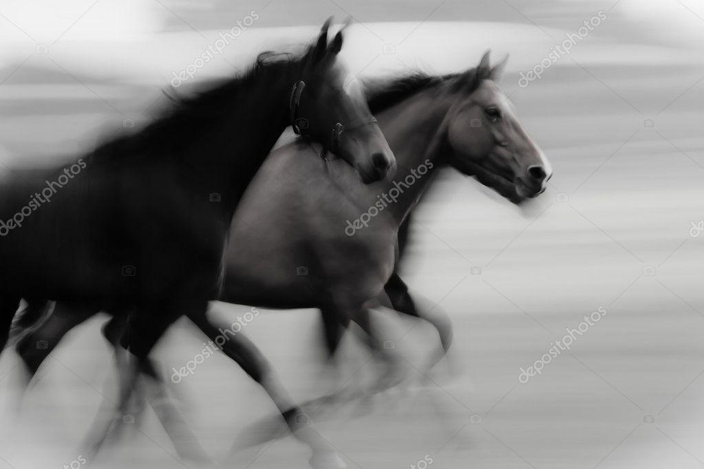 Fast running horses