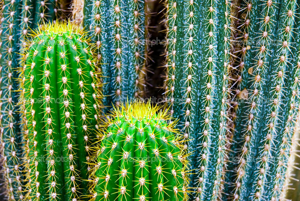 Tropical green cactus - cacti