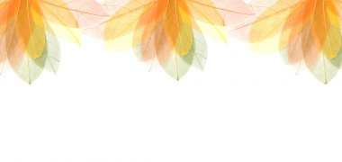 Transparent autumn leaves frame
