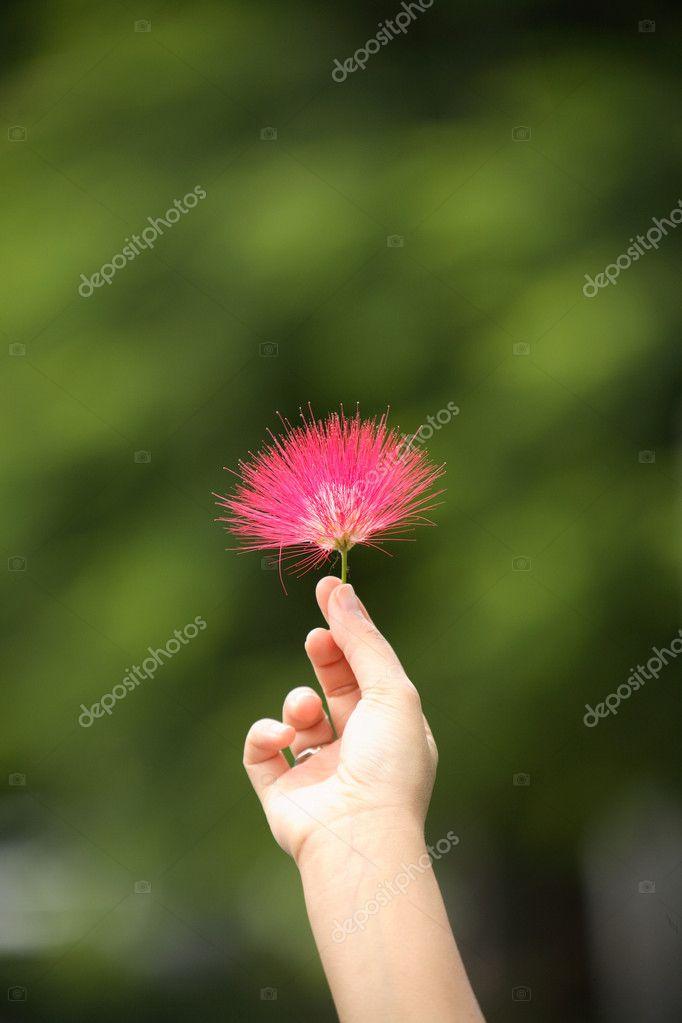 Sweet Red Flower