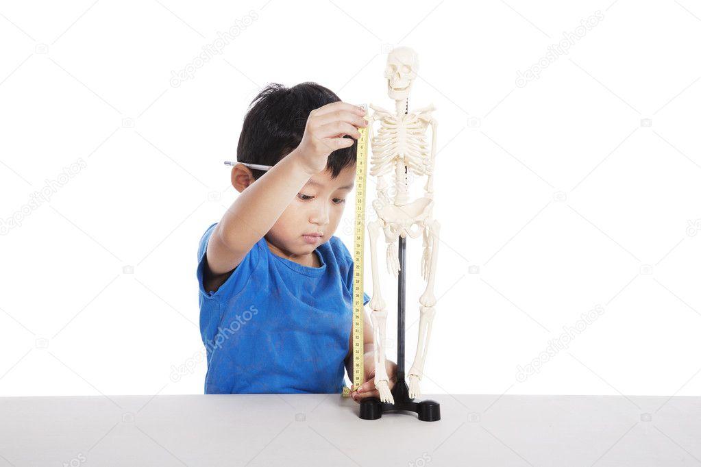 Junge lernt menschliche Anatomie — Stockfoto © realinemedia #7914929